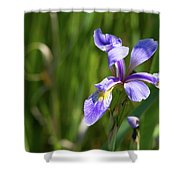 Shreve's Iris Shower Curtain
