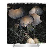 Shrooms 1 Shower Curtain