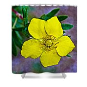 Shrubby Cinquefoil On Iron Creek Trail In Sawtooth National Wilderness Area-idaho  Shower Curtain