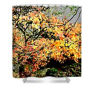 Shul Shower Curtain