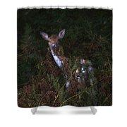 Shy Fallow Deer 4 Shower Curtain