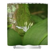 Shy Flower  Shower Curtain