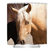 Shy Horse Shower Curtain
