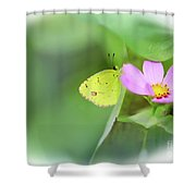 Shy Little Yellow Butterfly Shower Curtain