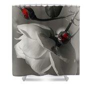 Shy White Rose Shower Curtain