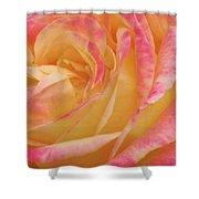Shy Yellow Rose Shower Curtain