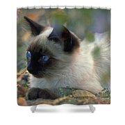 Siamese Cat Hiding Shower Curtain