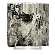 Siamese Cat Posing In Black And White Shower Curtain