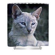 Siamese Cat Shower Curtain