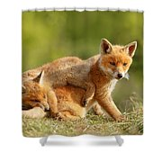 Sibbling Love - Playing Fox Cubs Shower Curtain