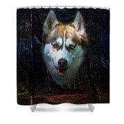 Siberian Husky Shower Curtain by Brian Roscorla