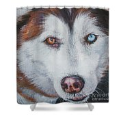 Siberian Husky Red Shower Curtain by Lee Ann Shepard