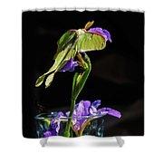 Siberian Iris And Luna Moth Shower Curtain