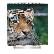 Siberian Tiger 2 Shower Curtain