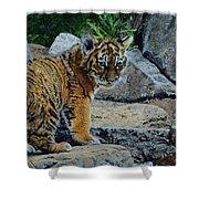 Siberian Tiger Cub Shower Curtain