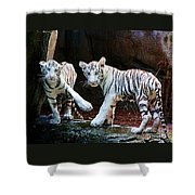 Siberian Tiger Cubs Shower Curtain