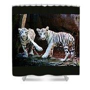 Siberian Tiger Cubs Shower Curtain