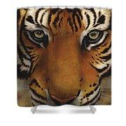 Siberian Tiger I Shower Curtain