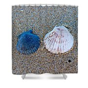 Side By Side Shells Shower Curtain