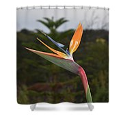 Side View Of A Beautiful Bird Of Paradise Flower  Shower Curtain