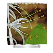Side View Of Cahaba Lily In Huntington Botanical Gardens In San Marino-california  Shower Curtain