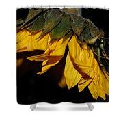 Sideview Sunflower Shower Curtain