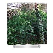 Siena-48 Shower Curtain