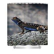 Sierra Fence Lizard 2 - Sierra Shower Curtain