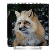 Sierra's Profile Shower Curtain