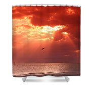 Siesta Key Pelican Shower Curtain