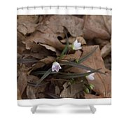 Sign Of Spring Shower Curtain