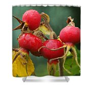 Signs Of Fall 2 Shower Curtain