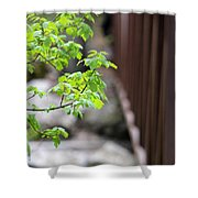 Signs Of Spring In American Fork Canyon Utah Shower Curtain