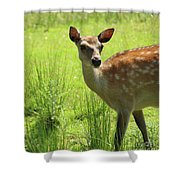 Sika Deer Omagh Shower Curtain