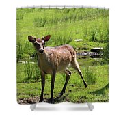 Sika Deer Water Hole Omagh Shower Curtain