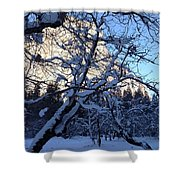 Silence In The Trees Yosemite Shower Curtain