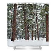 Silence Of The Woods Shower Curtain