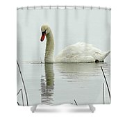 Silent Water Shower Curtain