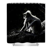 Silhouette Of A Monkey Shower Curtain