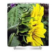 Silhouette Of A Sunflower Shower Curtain