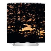 Silhouette Of Forest  Shower Curtain