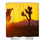 Silhouette Of Joshua Trees Yucca Shower Curtain
