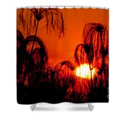 Silhouette Of Papyrus At Sunset Shower Curtain