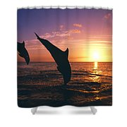 Silhouette Of Two Bottlenose Dolphins Shower Curtain