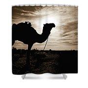Silhouetted Camel, Sahara Desert, Douz Shower Curtain