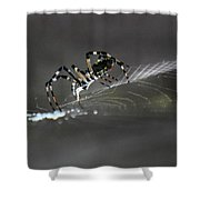 Silks Shower Curtain