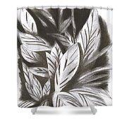 Silky Shower Curtain