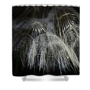 Silky  Shower Curtain
