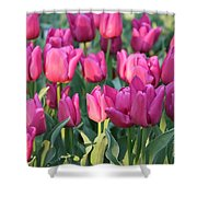 Silky Pink Tulips Shower Curtain