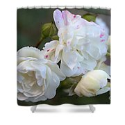 Silky Rose 2 Shower Curtain